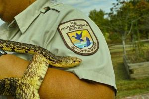 Louisiana Pine Snake with Ranger Nova Clarke