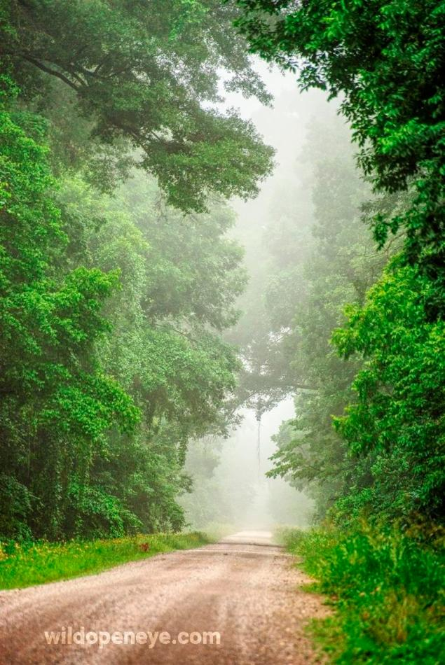 Tensas River National Wildlife Refuge looking spendid in early morning mist. Taken on Pentax K-1 by C. Paxton.
