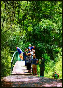 Our party exploring West Monroe's Restoration Park, at the stream we saw fish, butterflies and a Katydid.