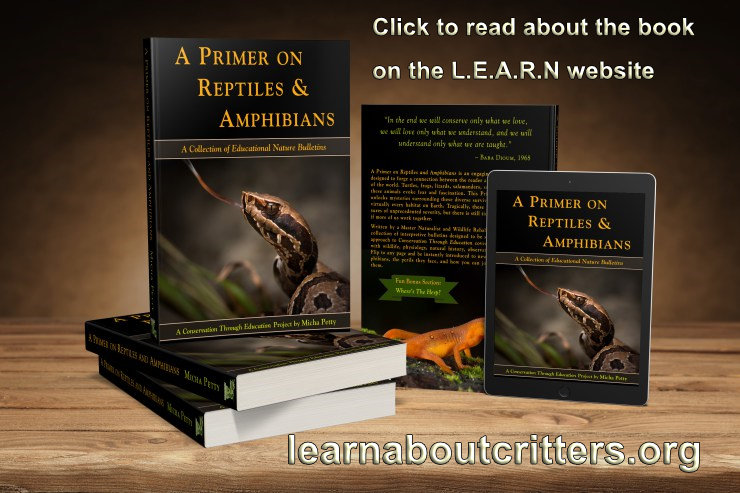 Image of the Primer on Reptiles and Amphibians