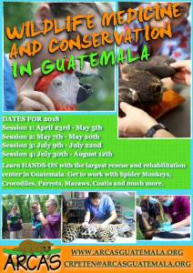 Advertisement of Wildlife Medicine and Conservation in Guatemala courses with ARCAS — Learn HANDS-ON with the largest rescue and rehabilitation center in Guatemala. Get to work with Spider Monkeys, Crocodiles, Parrots, Macaws, Coatis and much more.