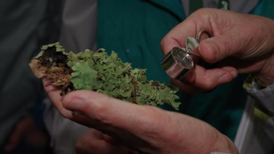 Examining a moss with Louisiana Master Naturalists