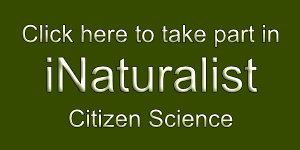 Click here for iNaturalist