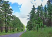 Kisatchie National Forest is a good example of a protected area that sinks carbon