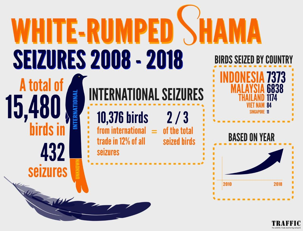 These statistics show seizures of White-rumped Shama song birds from illegal trade from 2008-2018.  In total authorities seized 15,480 birds in 432 cases.  10,376 of the birds (two thirds of the total) were being traded internationally. 7373 were from Indonesia, 6838 from Malaysia, 1174 from Thailand, 84 from Vietnam and 11 from Singapore. These figures represent considerable increase in trade over time.  TRAFFIC image and copyright.