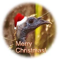 Christmas turkey in Santa hat