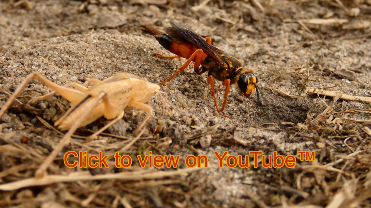 clicktoview