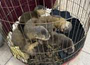 Six Asian small clawed otters confiscated in HCMC (Dec 3, 2020)